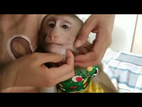 Monkey Baby Nui | What are you doing, Nui? What are you eating, Nui?