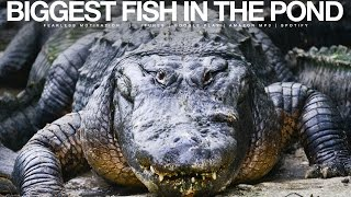 Biggest Fish In The Pond - Gym & Pre-Game Motivational Speech