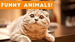 Top 100 Funny Pets on Vine | Cute Animal Videos 2017