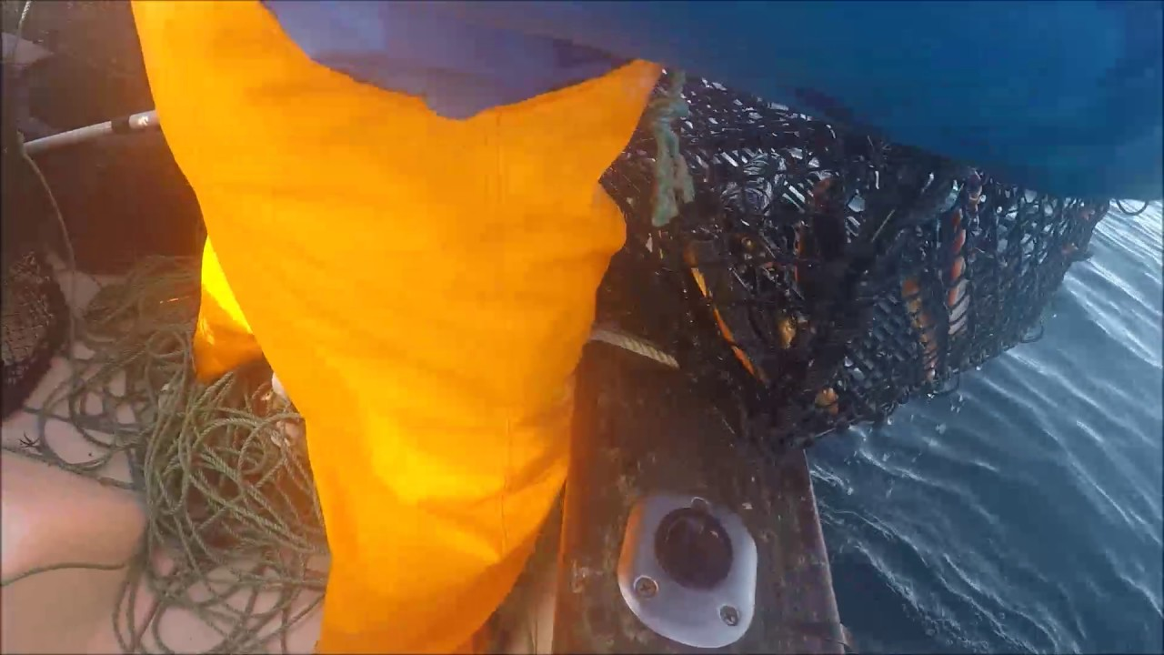 Hummerfiske 2016 - YouTube