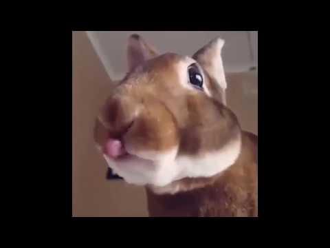 кролики смешное видео godic 3