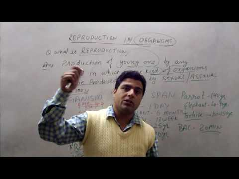 12th biology reproduction in organism in Hindi by Ganesh dutt