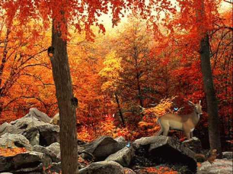 Falling Leaves Live Wallpaper Download Karl Madis S 252 Gis Youtube