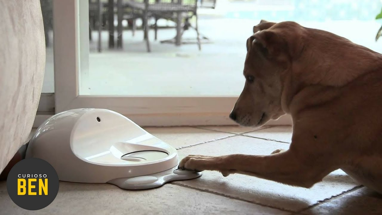 7 accesorios para tu mascota que debes comprarle ahorita for Accesorios para mascotas