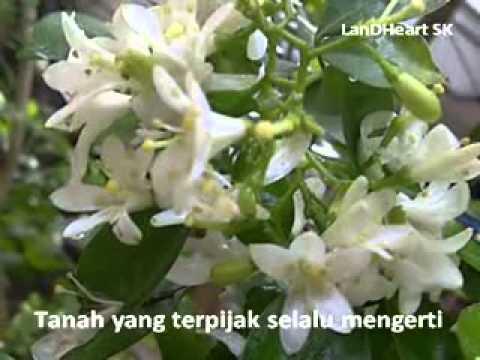Hati Seteguh Karang - Jamal Mirdad