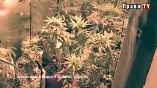 Черновицкие милиционеры задержали изготовителей наркотиков. Оперативное видео.(На днях сотрудники отдела по борьбе с незаконным оборотом наркотиков УМВД Украины в Черновицкой области..., 2013-06-27T09:47:52.000Z)