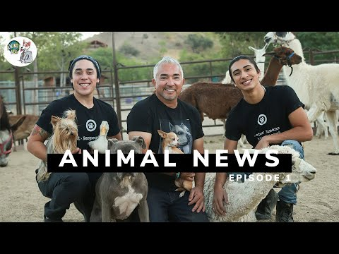 Our new Youtube Series, ANIMAL NEWS!