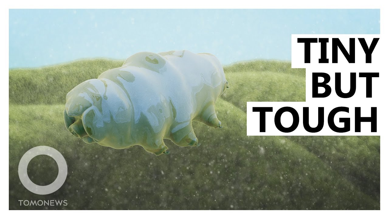 This Tardigrade Has a New Superpower
