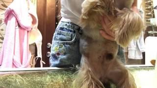 ГРЯЗНЫЕ ЛАПЫ?Советы по мойке лап собаке||Как помыть лапы собаке?|Stasya Pets