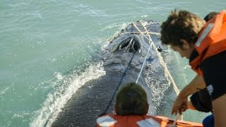 Sea Shepherd Crew Save Humpback Whale En...