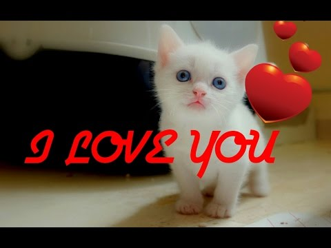 How cats say i love you cats saying i love you cute cat video how cats say i love you cats saying i love you cute cat video kuwtk thecheapjerseys Image collections
