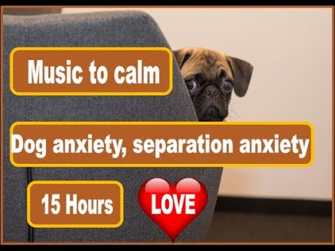 15 Hours Of Music For Puppy and Dog Calming from Anxiety and Separation Anxiety