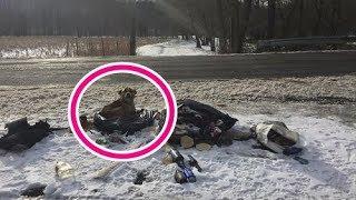 【感動実話】雪の上に捨てられたゴミ袋で暖をとっていた野良犬、9日後に幸せを掴む! thumbnail