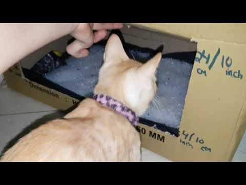 🐱😍Best  DIY Cat Litter Box!!!😍🐱