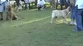 Pug Club Of Davao: Free Dog Behavior Training (short Clip)