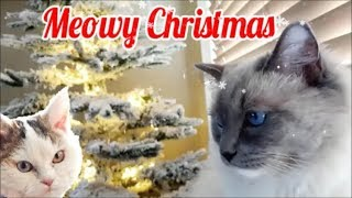 Merry Christmas To All Cat People | Bowie The Ragdoll Cat & Bella