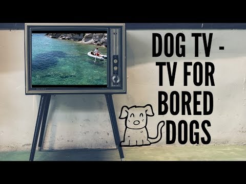 Dog TV - Television for Dogs (Calming Music For Dogs)