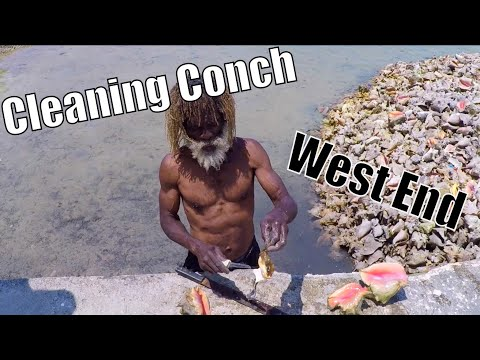 How to Clean a Conch: West End, Bahamas | Sailing Wisdom Ep 117