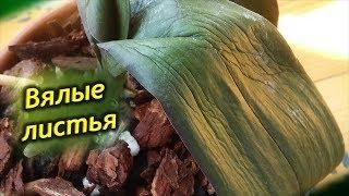 Почему вялые и мягкие листья у Орхидеи? Что делать, как спасти цветок?