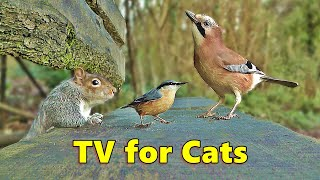 Cat TV ~ Entertainment for Cats to Watch Squirrels and Birds ⭐ 8 HOURS ⭐