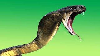 পৃথিবীর সবচেয়ে বিষাক্ত ৫ টি সাপ ।Top 5 venomous snakes in the world
