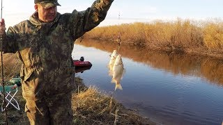 Такой сумасшедшей рыбалки у меня давно уже не было!