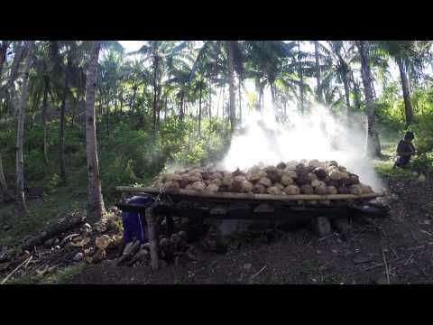 Coconut harvesting in the Philippines.