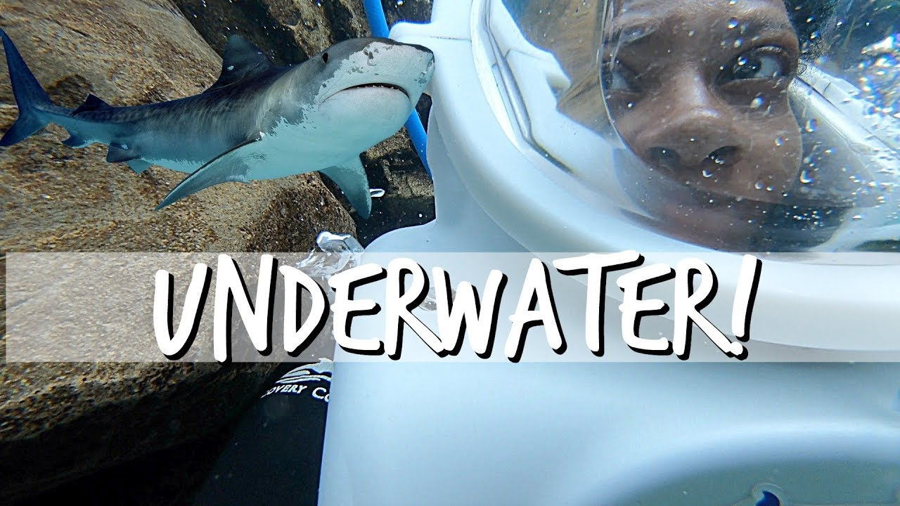 underwater-walking-tour-discovery-cove-family-vlogs