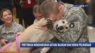 VIRAL!!! Moment Mengharukan Seekor Anjing Bertemu Majikannya