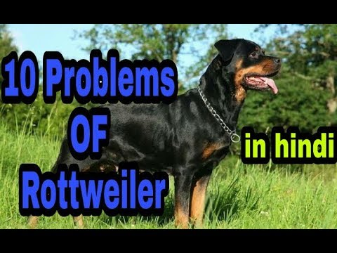 10 Problems OF Rottweiler in hindi || problems of dogs ||