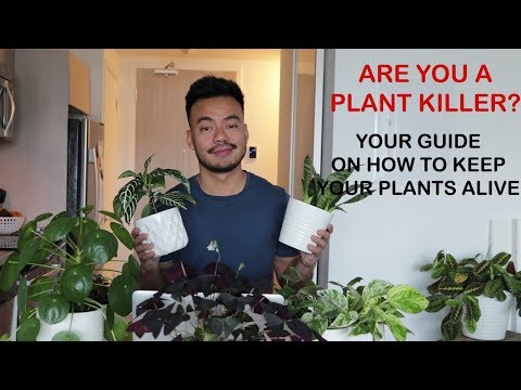 HOW TO KEEP YOUR HOUSE PLANTS ALIVE   GUIDE FOR BEGINNERS