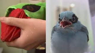 Why This Zoo Uses a Puppet to Feed Rescued Baby Chick