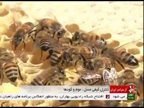 Iran East Azerbaijan province, Honey research center مركز تحقيقات عسل استان آذربايجان شرقي ايران