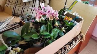 Орхидеи уезжают на дачу! Солнцезащитная пленка на окна для тех, кто остается