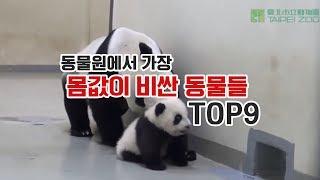 [내맘대로 랭킹] 동물원에서 가장 몸값 비싼 동물 TOP9 ! 10억 몸값이라니 대박. .