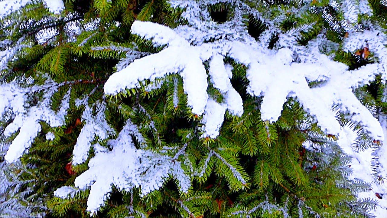 фото картинки зимние