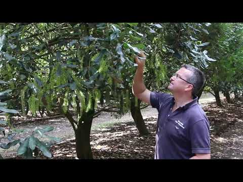 What makes a top-performing farm: Macadamia case study
