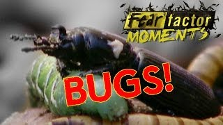 Fear Factor Moments | Gross Gorge