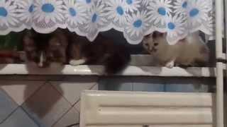 Нюх у котов очень тонкий.