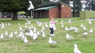 Video Little girl attacked feeding seagulls download MP3, 3GP, MP4, WEBM, AVI, FLV November 2017