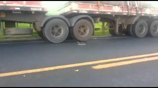 Snake in highway, attacking trucks