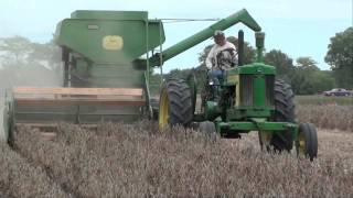 BEAN HARVEST with Antique Combines JD & Oliver  tubalcain