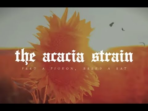 """The Acacia Strain release 2 new songs """"Feed A Pigeon, Breed A Rat"""" and """"Seeing God"""""""