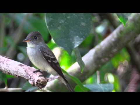 Al Natural Resort - Bocas del Toro, Panama