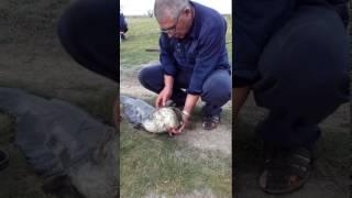 Рибалка в Криму село Новопавлівка!!!!!!