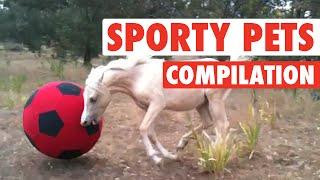 Sports Fan Pets || Biggest Pet Sports Fans (Funny Compilation)