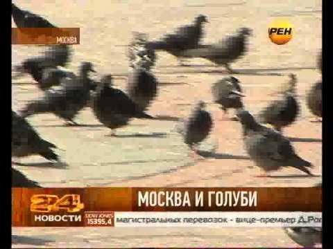 Голуби-зомби. Эпидемия в Москве