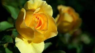 Watch Judy Collins The Rose video