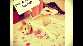 For Animal Lovers: Tufan billi r ekdiner valobashar golpo.....