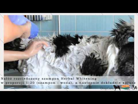 Plush Puppy - American Akita Grooming by DogCare.com.pl
